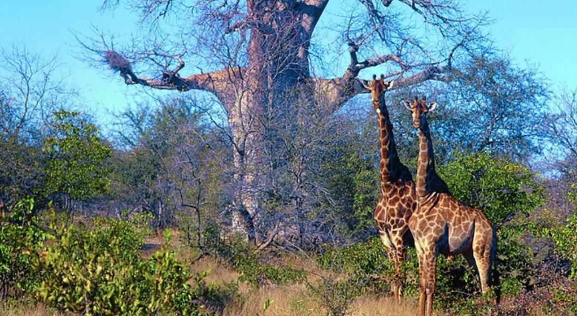 DrJerryTennantKRUGERPARKSOUTH AFRICA